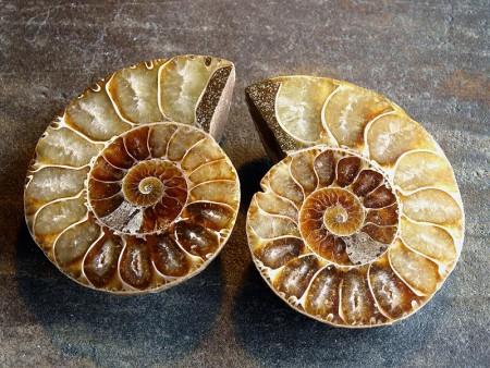 Fossile Ammonitter delte og polerte